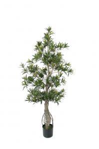 Podocarpus - - 110 cm - www.frokenfraken.se