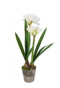Mr Plant Amaryllis - Vit - 90 cm