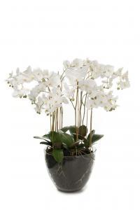 Phalaenopsis - Vit - 90 cm - www.frokenfraken.se