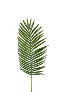 Palmblad - Grön - 115 cm - www.frokenfraken.se