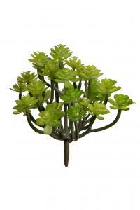 Succulent - Grön - 13 cm - www.frokenfraken.se