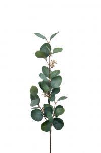 Mr Plant Eucalyptus med bär - Grön - 70 cm