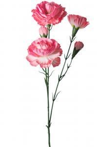 Elegance nejlika - Rosa - 65 cm - www.frokenfraken.se