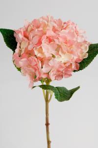 Mr Plant Hortensia - Rosa - 40 cm - www.frokenfraken.se