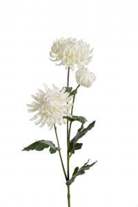 Chrysanthemum - Vit - 60 cm - www.frokenfraken.se