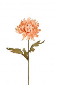 Chrysanthemum - Brun - 55 cm - www.frokenfraken.se