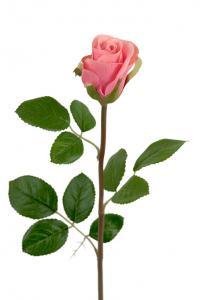Ros - Rosa sidenros - 50 cm - www.frokenfraken.se