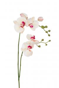 Phalaenopsis - Gul - 100 cm - www.frokenfraken.se