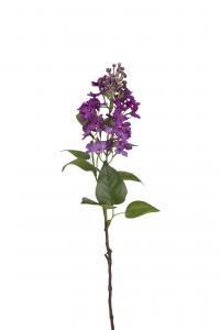 Mr Plant Syrén - Lila - 60 cm - www.frokenfraken.se