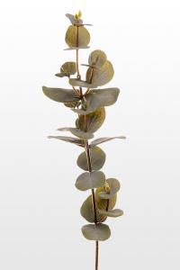 Eucalyptus - Grön - 40 cm - www.frokenfraken.se