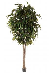 Longifolia - - 320 cm - www.frokenfraken.se