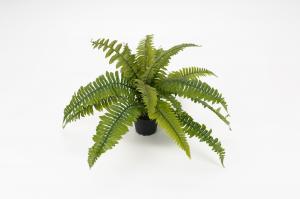 Mr Plant Ormbunke - Grön - 30 cm