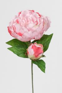 Pion - Rosa - 35 cm - www.frokenfraken.se