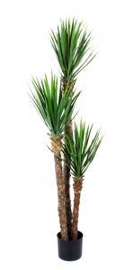 Yucca Rostrata - - 150 cm - www.frokenfraken.se