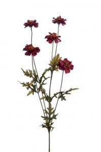 Coreopsis - Lila - 75 cm - www.frokenfraken.se