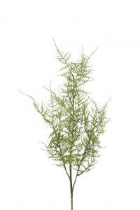 Mr Plant Plumosus - Grön - 70 cm