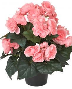 Begonia Rosa - Konstväxt - 28 cm - www.frokenfraken.se