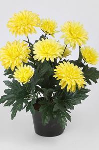 Mr Plant Chrysanthemum - Gul - 30 cm - www.frokenfraken.se