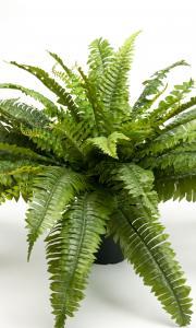 Mr Plant Ormbunke - Grön - 40 cm