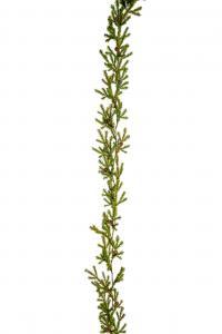 Grangirlang - Grön - Nättare modell - 140 cm - www.frokenfraken.se