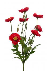 Mr Plant Vallmo - Röd - 35 cm - www.frokenfraken.se