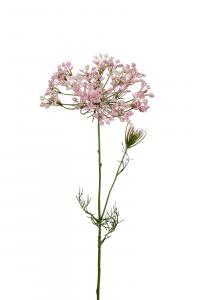 Allium - Rosa - 70 cm - www.frokenfraken.se