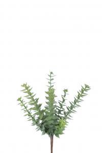 Succulent - Grön - 20 cm - www.frokenfraken.se