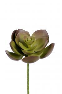 Succulent - Grön - 9 cm - www.frokenfraken.se