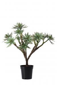 Succulent - Grön - 50 cm - www.frokenfraken.se