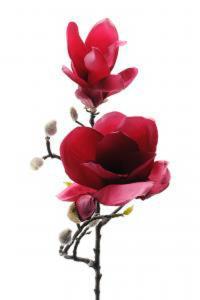Magnolia - Rosa - 60 cm - www.frokenfraken.se