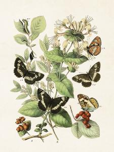 Poster - Fjärilar - 18x24 cm - www.frokenfraken.se