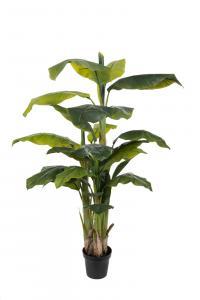 Banan - Bananträd i kruka - 150 cm - www.frokenfraken.se