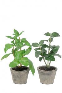 Mr Plant Kryddmix 2 st