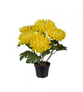Chrysanthemum - Gul - 30 cm - www.frokenfraken.se