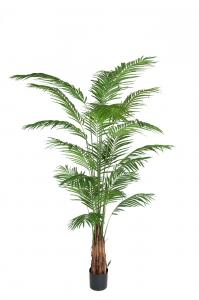 Mr Plant Areca Palm - - 240 cm