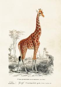 Poster - Vintage - Giraff - 35x50 cm - www.frokenfraken.se