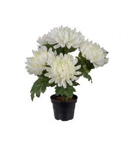 Chrysanthemum - Vit - 30 cm - www.frokenfraken.se