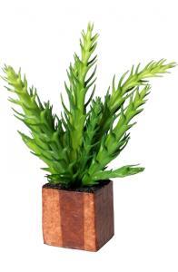 Konstväxt till Cult Kub - Kaktus - www.frokenfraken.se