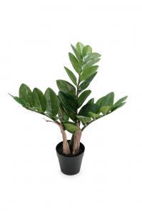 Zamifolia - Grön - 45 cm - www.frokenfraken.se