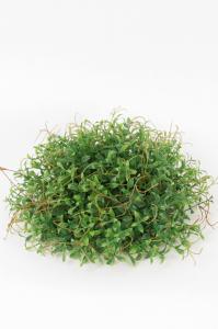 Mr Plant Tradescantia - Grön - 11 cm
