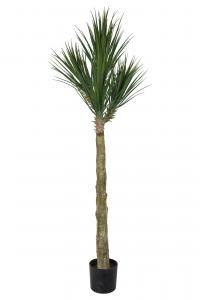 Yucca Rostrata - - 180 cm - www.frokenfraken.se