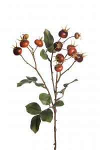 Mr Plant Nypon - 12 st - Orange - 65 cm - www.frokenfraken.se