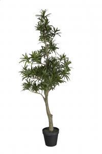 Podocarpus - Grön - 90 cm - www.frokenfraken.se