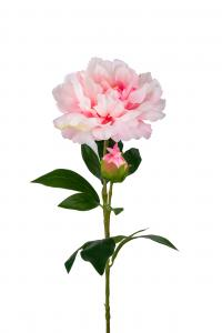 Pion - Rosa - 65 cm - www.frokenfraken.se