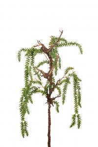 Lummer - Grön - 90 cm - www.frokenfraken.se