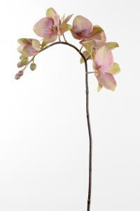 Mr Plant Phalaenopsis - Lila - 60 cm