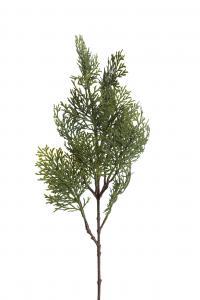 Cypress - - 60 cm - www.frokenfraken.se