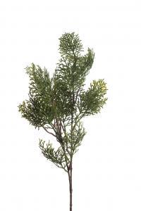 Cypress - - 85 cm - www.frokenfraken.se
