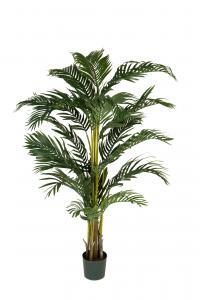 Kentia Palm - - 140 cm - www.frokenfraken.se