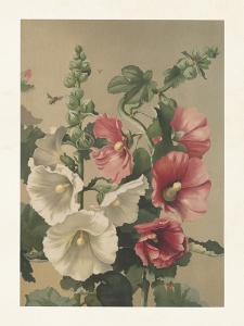 Poster - Vintage - Stockrosor - 18 x 24 cm - www.frokenfraken.se